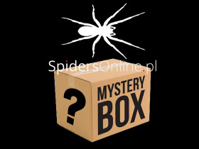 Mystery box - best seller!
